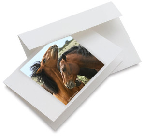 Spirit of the Wild Horse Notecards
